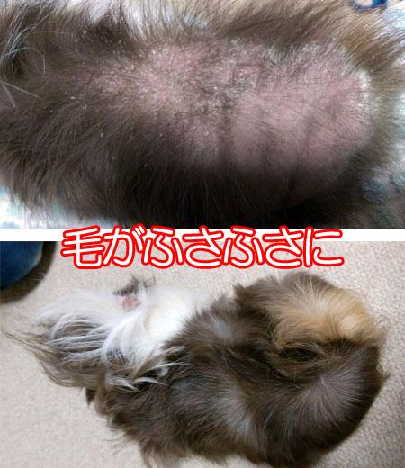 犬猫ペットの国産SPF豚プラセンタエキス末-10
