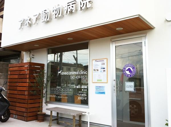 ホリスティック治療のアネア動物病院