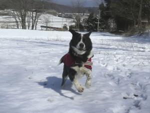 雪エルビン1