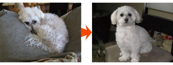 プラセンタによる毛並み改善例