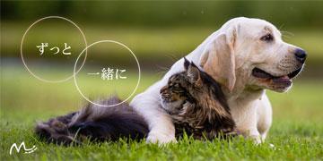 犬の癌の完治を目指した免疫対策-コルディ