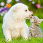 犬の癌、猫の癌の完治を目指した免疫対策-コルディ