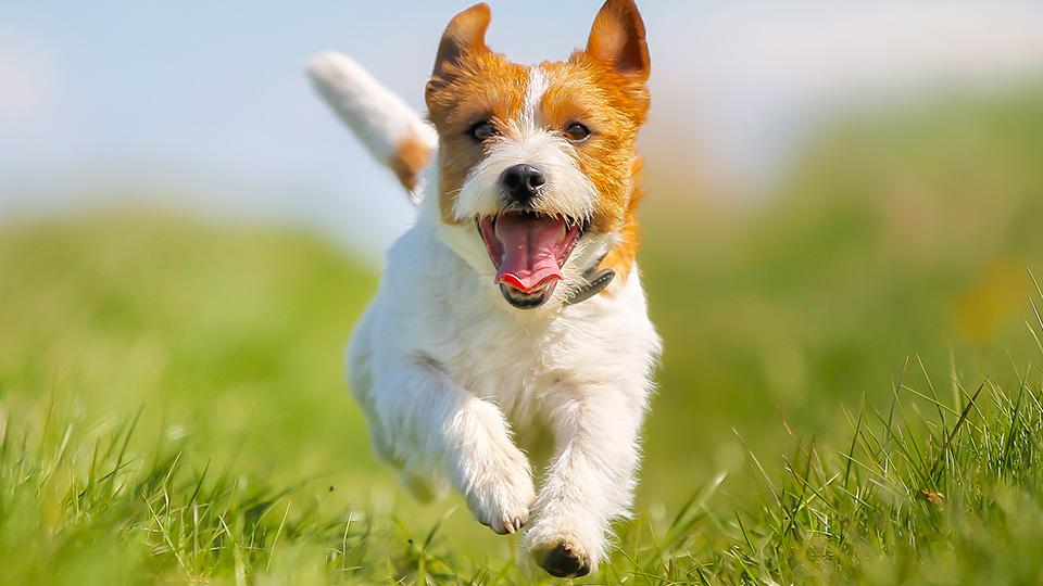 犬・猫・ペットが口にするものへの安全・注意